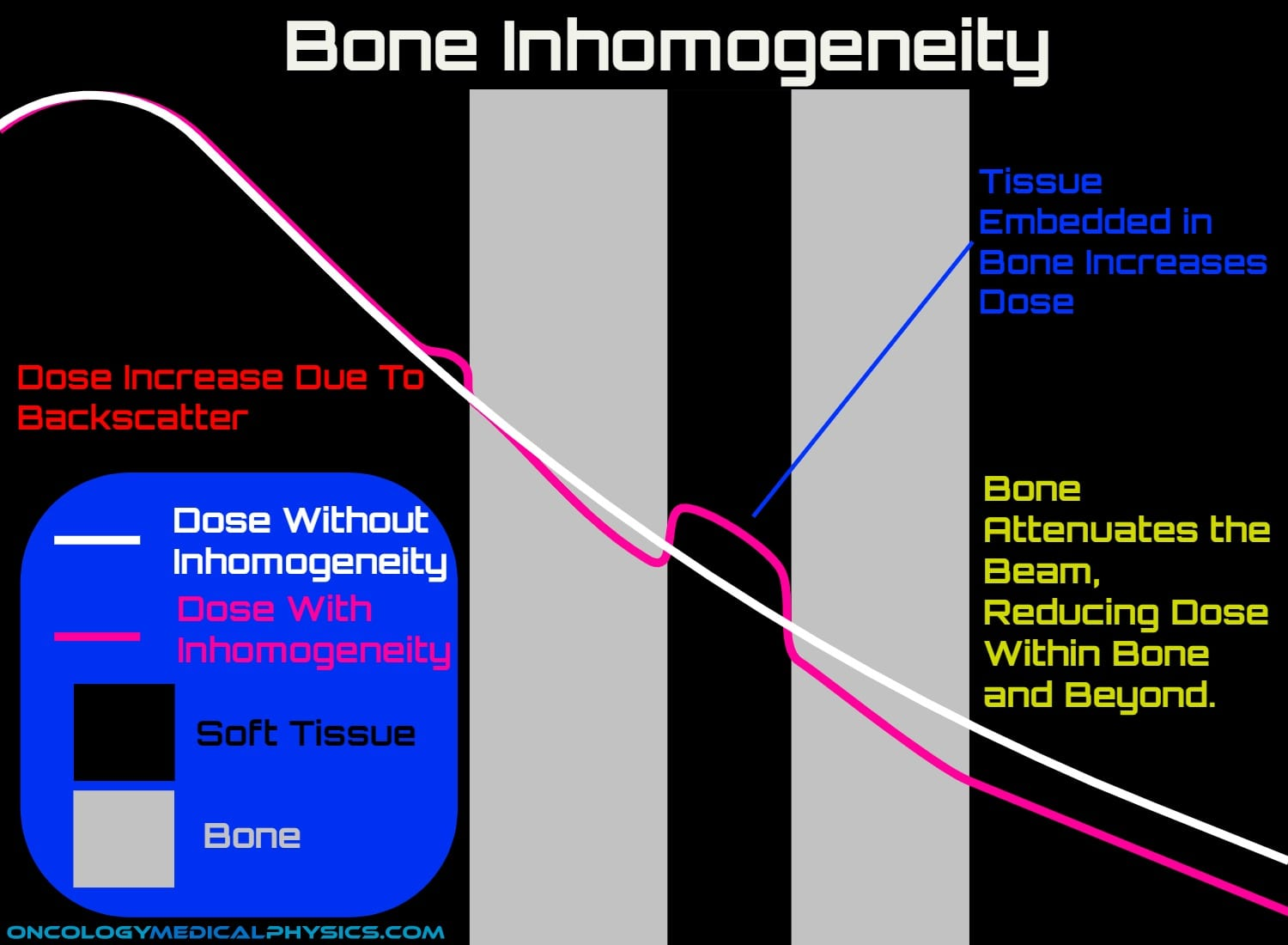 Bone attenuates photon beam but increases dose to tissue embedded in bone.