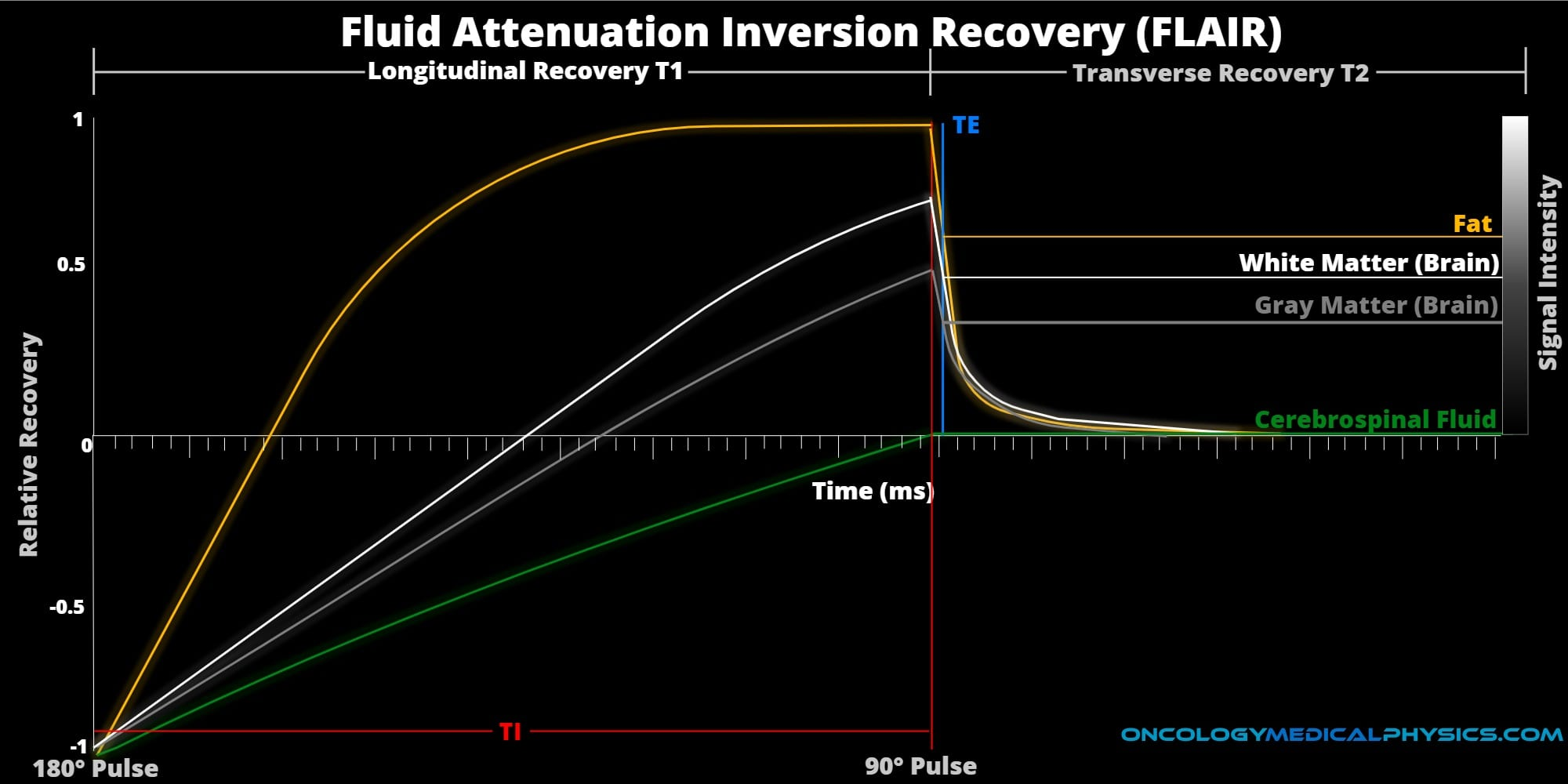 Operation and contrast of fluid attenuation inversion recovery (FLAIR) weighted MRI