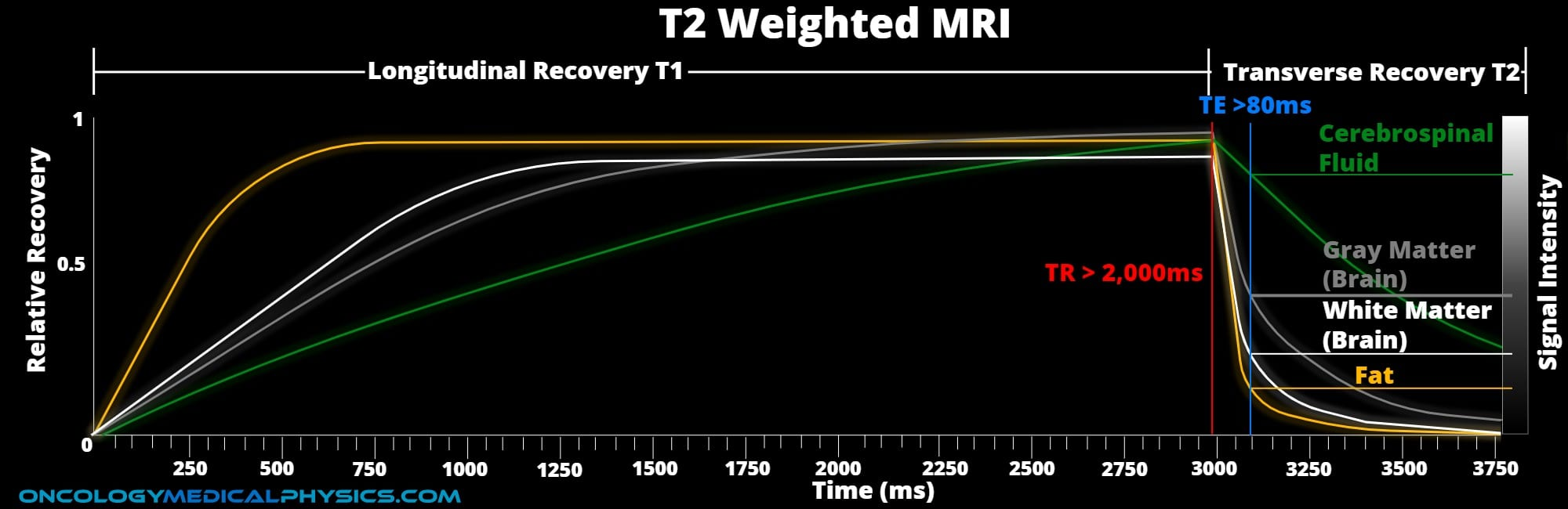 Creating T2 weighting contrast in MRI